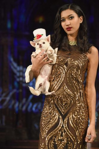 Puppy Power: Anthony Rubio Fall 2018: New York Fashion Week