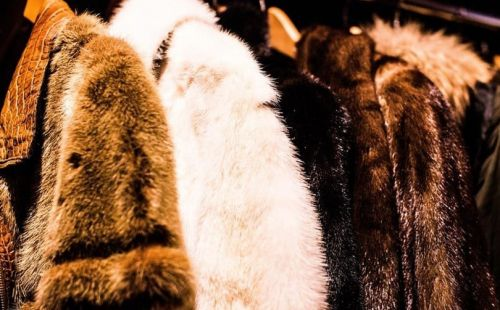 Macy's and Bloomingdale's ban the sell of fur across all platforms