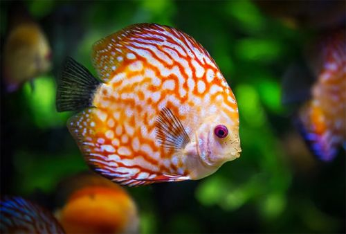 What Are the Benefits of Keeping Fish?