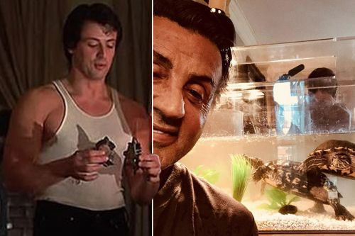 Sylvester Stallone is still pals with turtles from original 'Rocky'