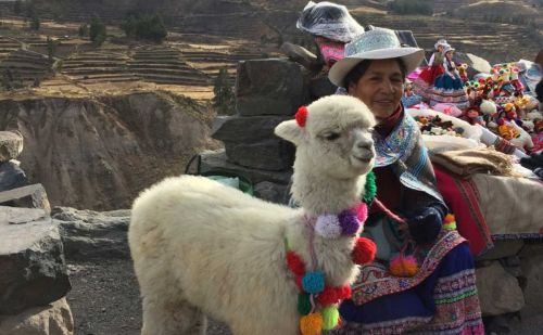 """Sustainability and alpaca are synonyms,"" says Peru's Director of Trade Commission"
