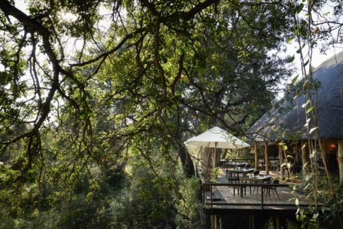 Elite Review: Royal Malewane, South Africa