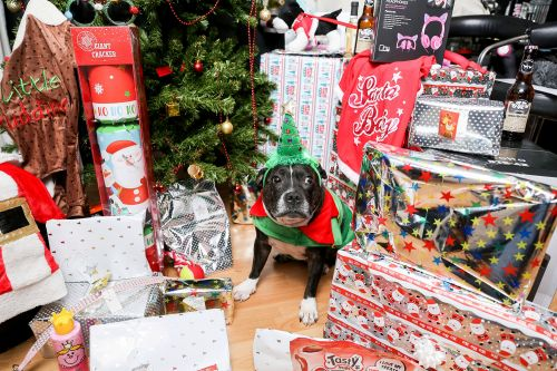 This spoiled dog is going to have a better Christmas than you
