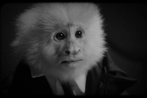 David Lynch interrogates a monkey in surprise Netflix film, 'What Did Jack Do?'