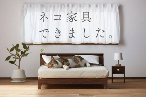 Okawa City's Cat Furniture Honors Fukuoka Craftsmanship