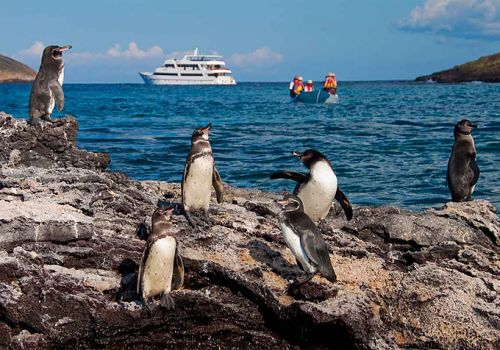 An evolutionary expedition aboard the Galapagos Legend