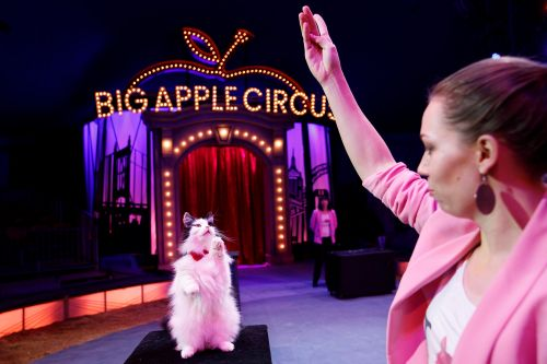 At the Big Apple Circus, these clever kitties rule the ring