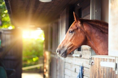 A Horse Is Suing His Former Owners for Medical Expenses Stemming