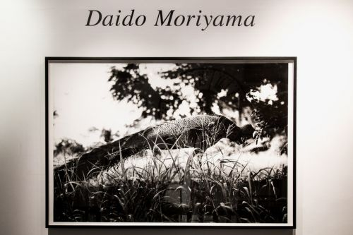 A Look Inside the New Daidō Moriyama Exhibit in London